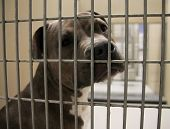 stock photo of runaway  - a dog in an animal shelter - JPG