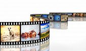 3d image of film strip with african animals
