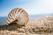 nautilus shell on the issyk-kul beach sand with lake and sun background