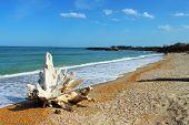 Perspective Seashore