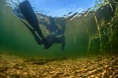 picture of spearfishing  - Underwater shot of the spearfisher moving in the reed - JPG