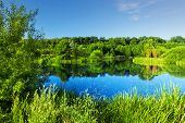 Clear lake in green forest at spring, summer time. Blue sky