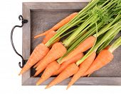 Fresh carrot on wooden tray close up