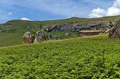 Sedimentary rock and fern in Giants Castle
