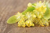 Branch of linden flowers on wooden background