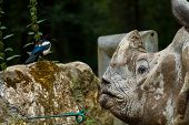 Rhino Talking To Bird