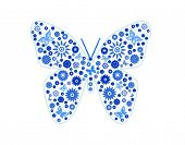 Butterfly consist of blue butterflies.