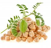 chickpeas plant  with seed heap close up,isolated on white background