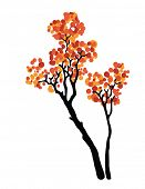 autumn tree, vector illustration on white background