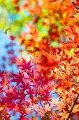 Beautiful transitions of colors of autumn. Colorful spectrum of bright autumn colors, Red, orange, y