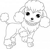 poodle coloring page