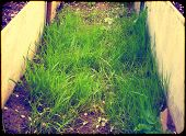 Green Grass On Ground