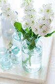 Matthiola Flowers