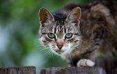 Cat sitting on the wooden fence and looking to a camera