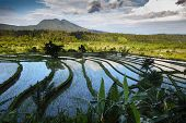 Rice fields of Bali island, Indonesia