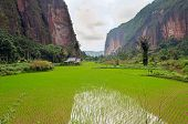 picture of west village  - Harau Valley - JPG