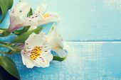 White Alstroemeria On The Blue Wooden Table
