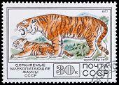 Protected Mammals