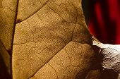 Nature Abstract - Epidermis Cells And Veins Of A Dying Leaf