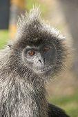 Portrait Of A Sad Monkey
