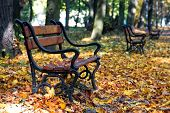 Wooden bench in autumn scenery