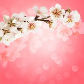 Blooming tree branch with pink flowers on bokeh background. Vector illustration