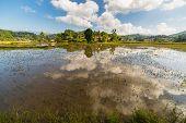 Toraja Landscape, Rice Paddies