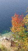 Autumn tree over the lake
