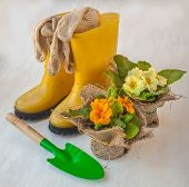 Primula And Yellow Boots
