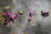 Grunge Plant Wallpaper