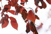 Beautiful autumn leaves on tree