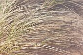 Grass On The Beach In Daylight