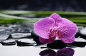 Single orchid with long leaf and stones on wet background