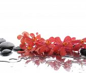 Still life with Beautiful branch orchid and wet black stones