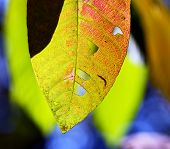 Close Up Leaf In Autumn