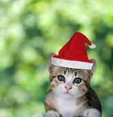 Kitten In Santa Claus Xmas Red Hat On Green Bokeh Background.