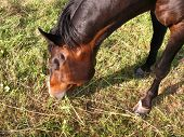 stock photo of thoroughbred  - The loveable thoroughbred horse of a my friend - JPG