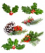 Set of   Holly leaves and berries with a pine branch on a white background