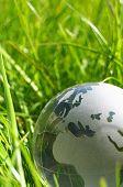 Постер, плакат: Глобус стекла или земли в траве
