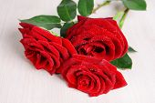 Beautiful red roses on table close-up