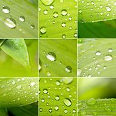 collage set of macro water drops on green leaves, collection background