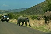 Baby elephant cut off the road in Pilanesberg National Par