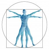 foto of male body anatomy  - Vitruvian human or man as a concept - JPG