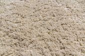 picture of hairy  - Hairy beige carpet texture  - JPG