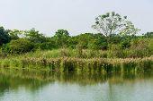 pic of marsh grass  - Marsh herb - JPG
