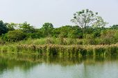 foto of marshes  - Marsh herb - JPG