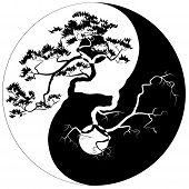 picture of bonsai tree  - Black and white Bonsai tree on the Yin Yang symbol - JPG