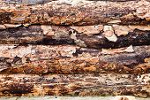 picture of log fence  - background fence from pine logs close up - JPG