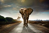 Walking Elephant