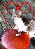 Cailin On Old Chair
